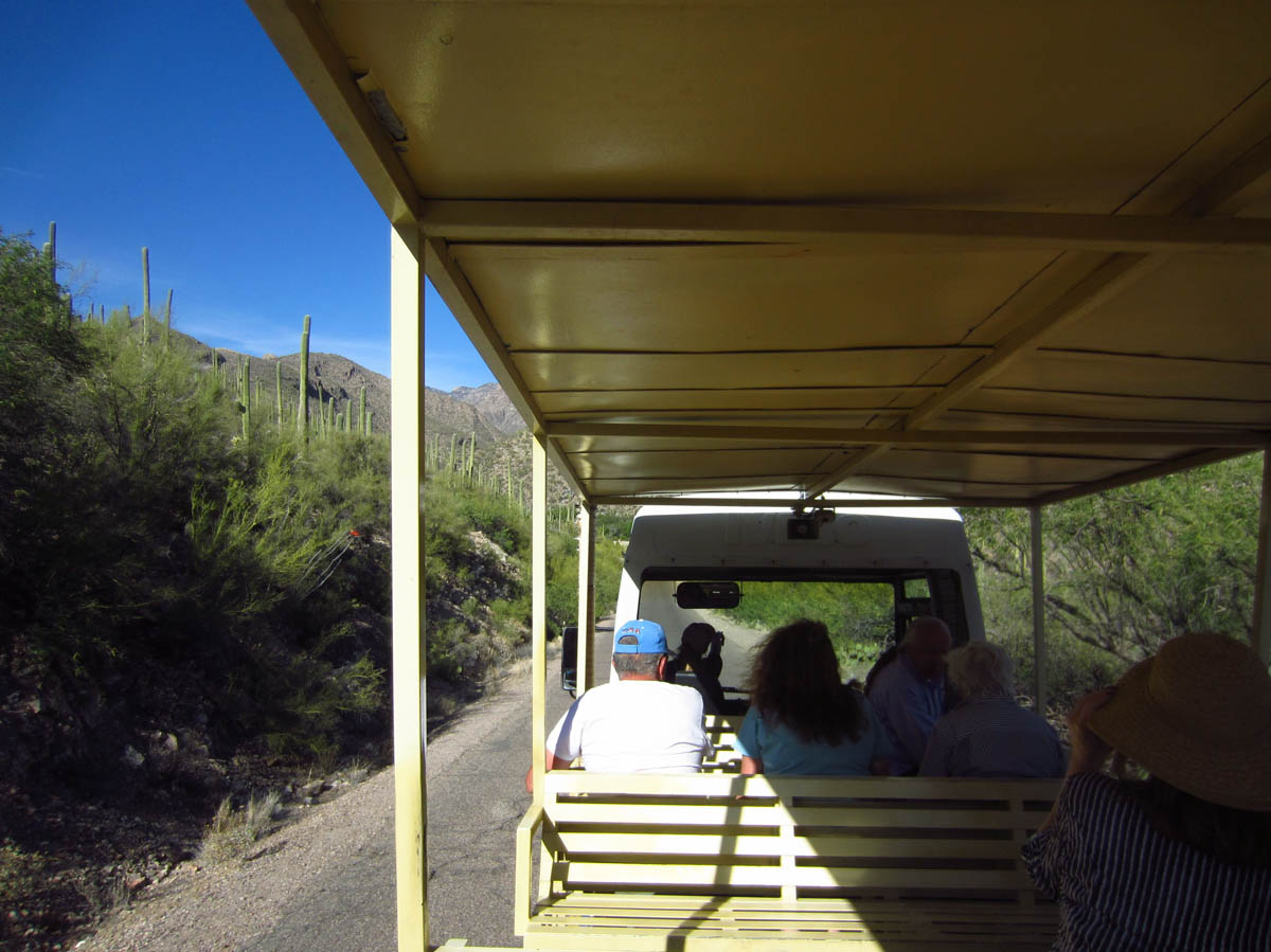 Sabino Canyon Tours Tram heads up the canyon every half hour.