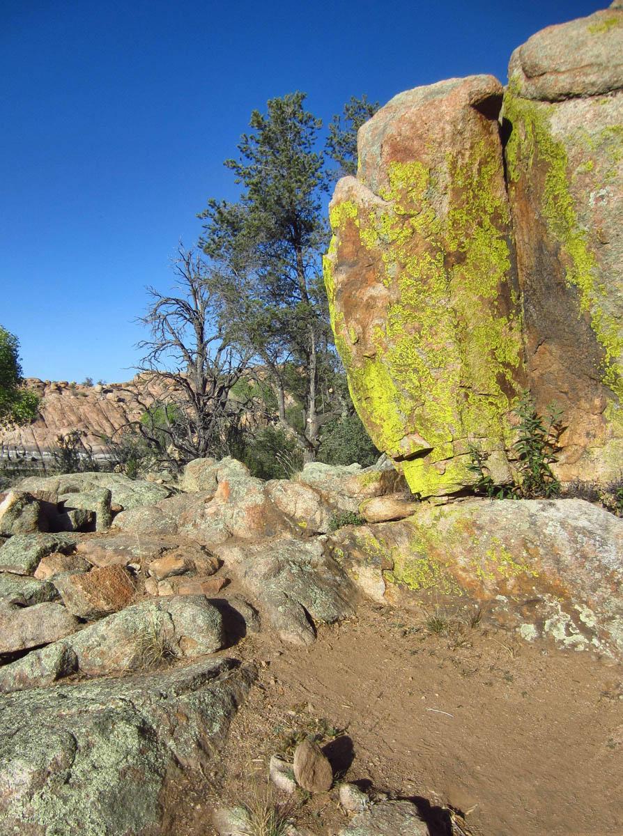Towering lichen