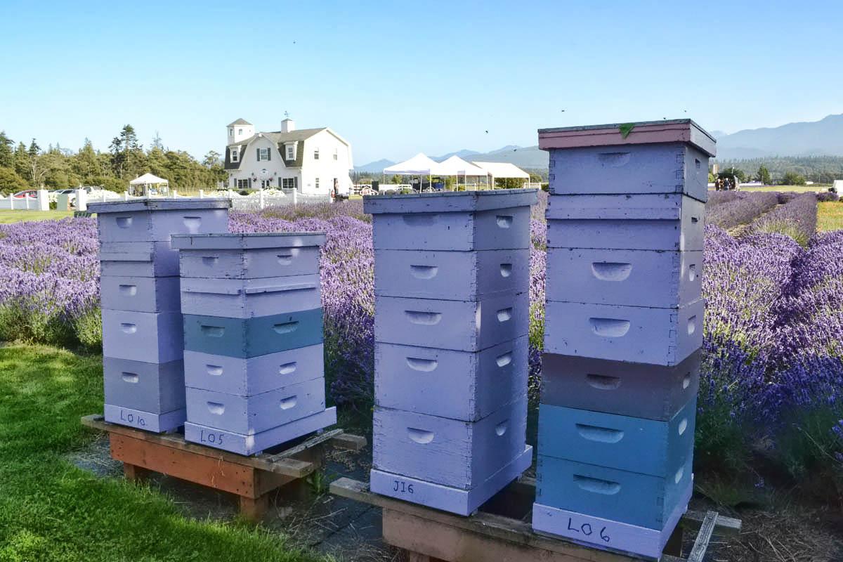 Even purple bees!