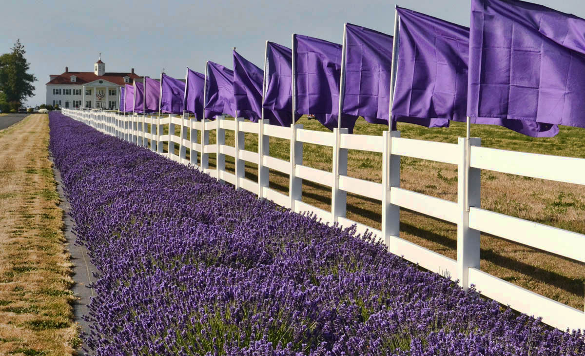 Washington Lavender Farm and Bed and Breakfast