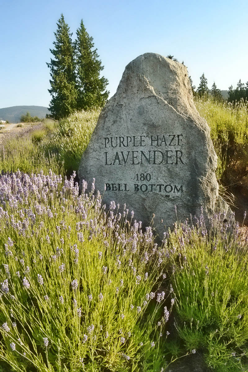 "It's only fitting with a name like ""Purple Haze"" that the address be ""Bell Bottom Lane."""