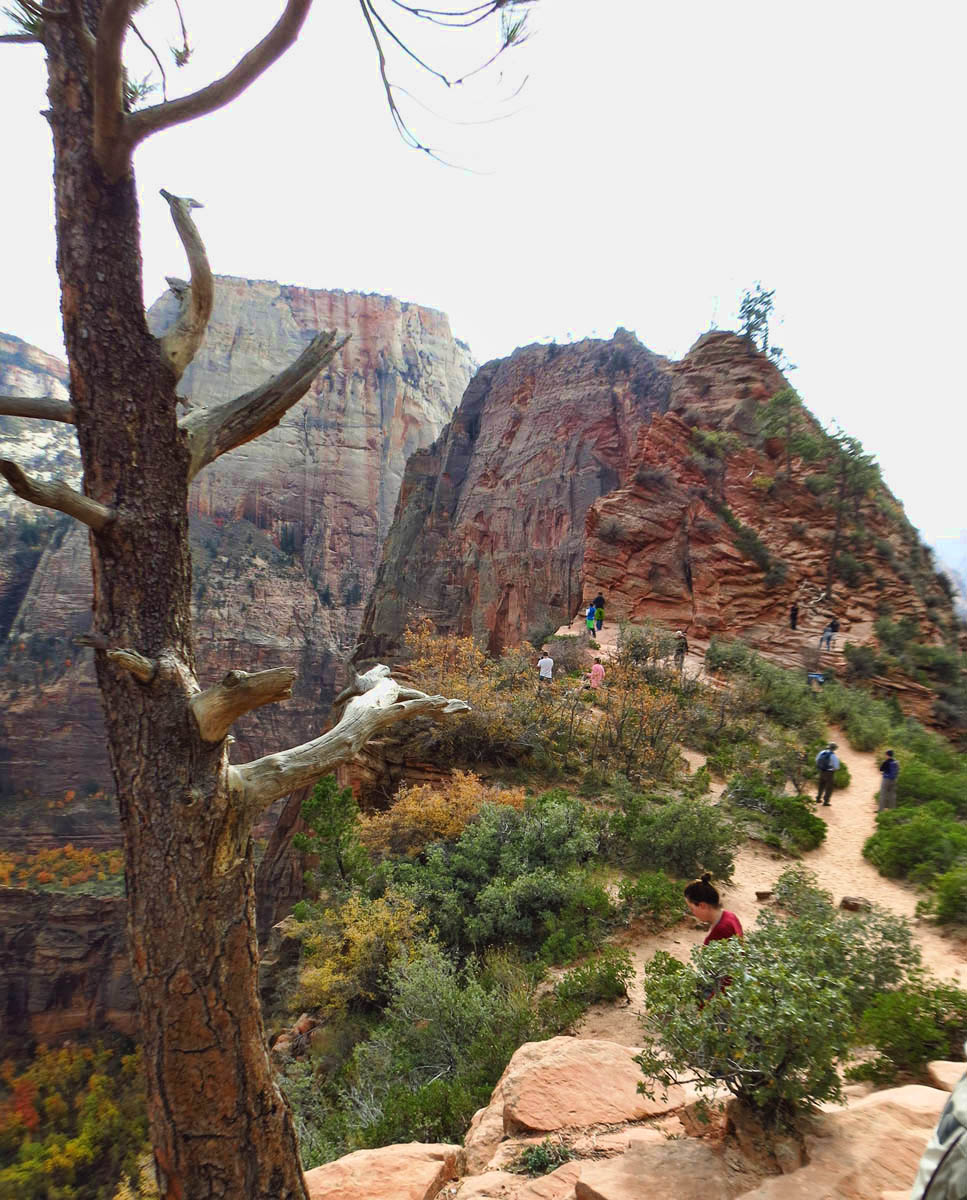 View of Angel's Landing approach from Scout Lookout.