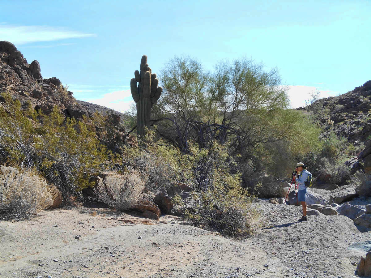 We discover one of less than half a dozen saguaros in this area.