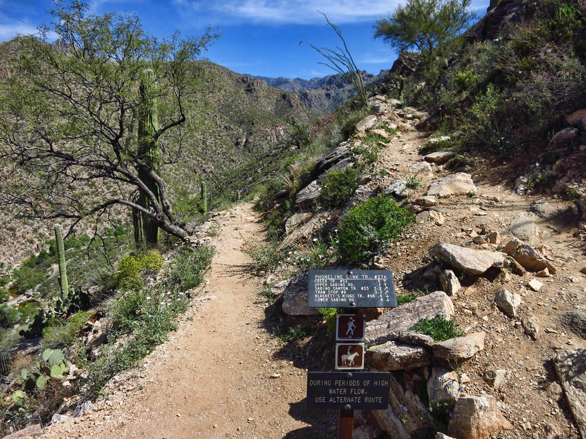 Telephone Line Trail goes to the right, high along the canyon wall.