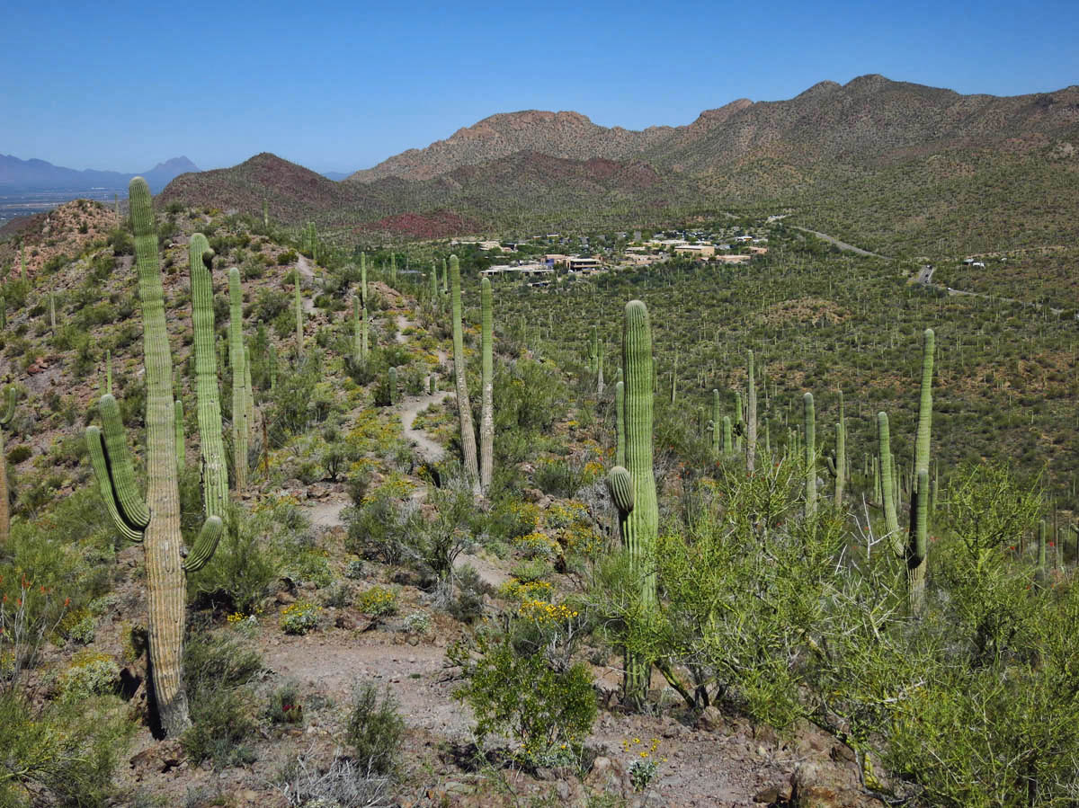 Sonoran Desert Museum is at the end of Brown Mountain / Cougar Loop Trail.