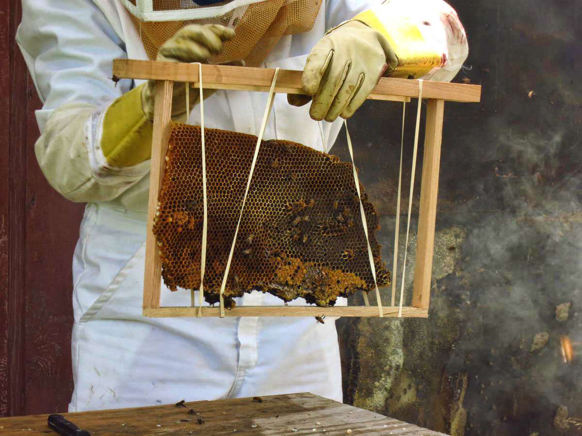 Ideally, bees will fill in the gaps to attach the comb to the frame.