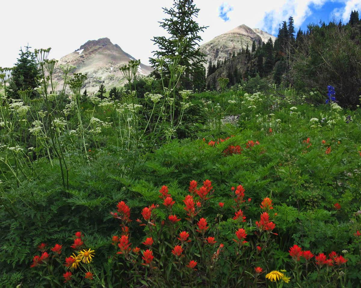 Mt Sneffels in red.