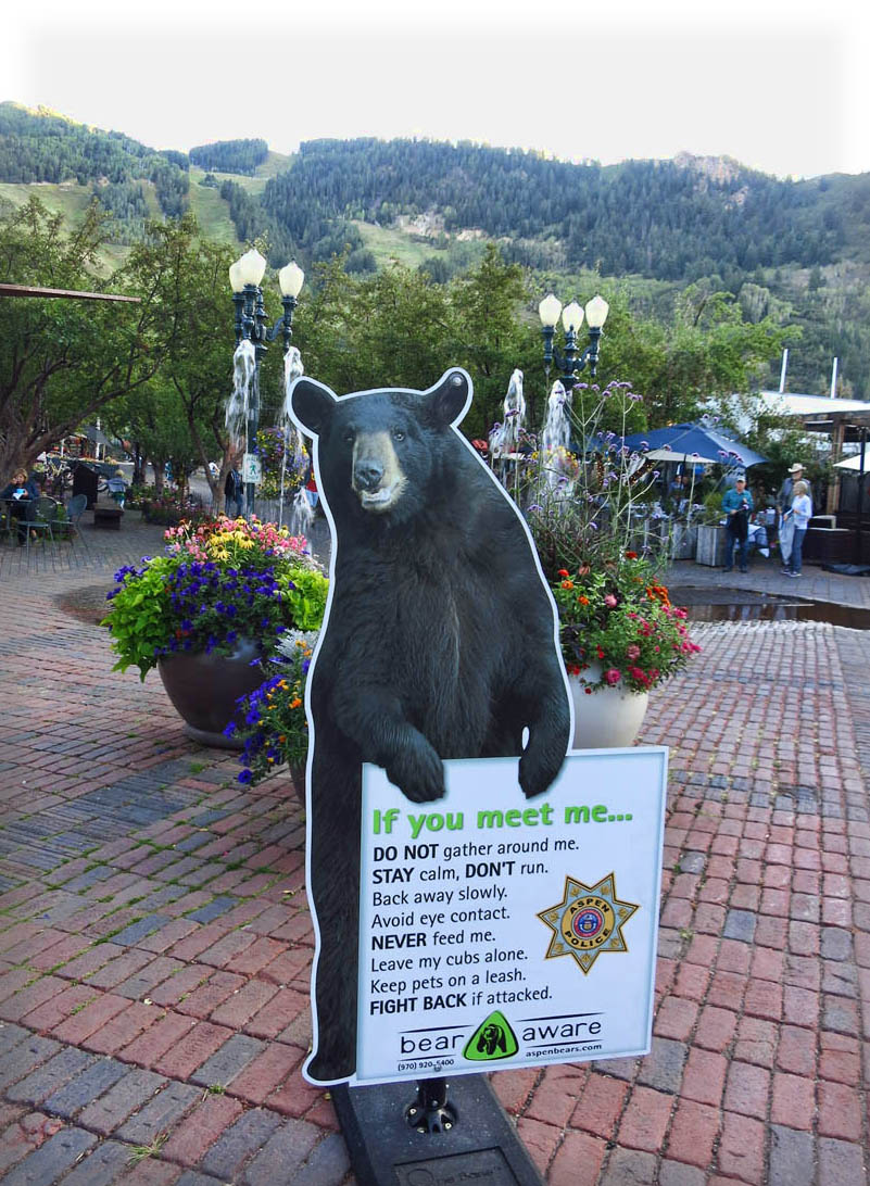 Hey, a bear's gotta pose for the paparazzi too!