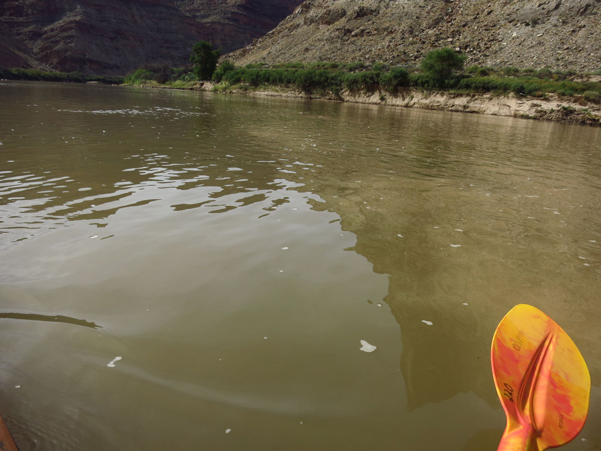 We have now reached the Confluence where the muddy brown water swirls into the deep green of the Colorado.  Unfortunately, none of my photos adequately show the swirls in the water as what looks like chocolate milk flows into olive juice.