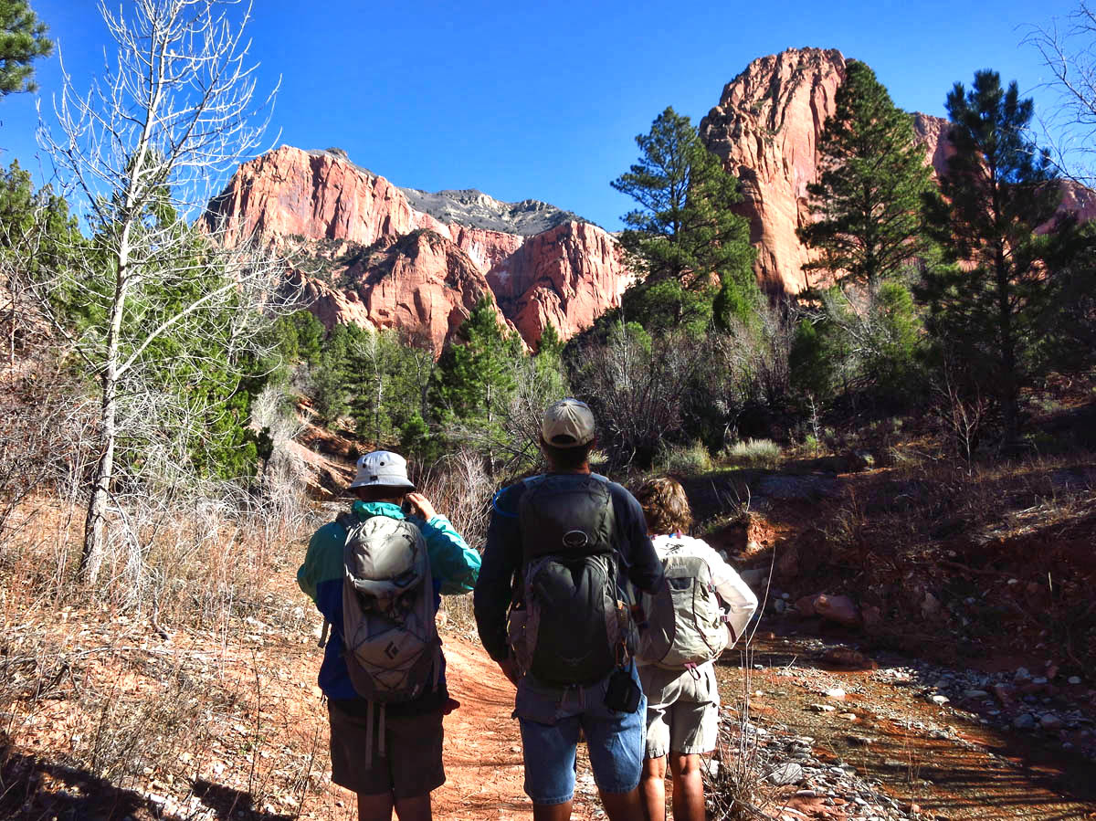 Taylor Creek is 5 mile RT hike in Kolob Canyon section of Zion.