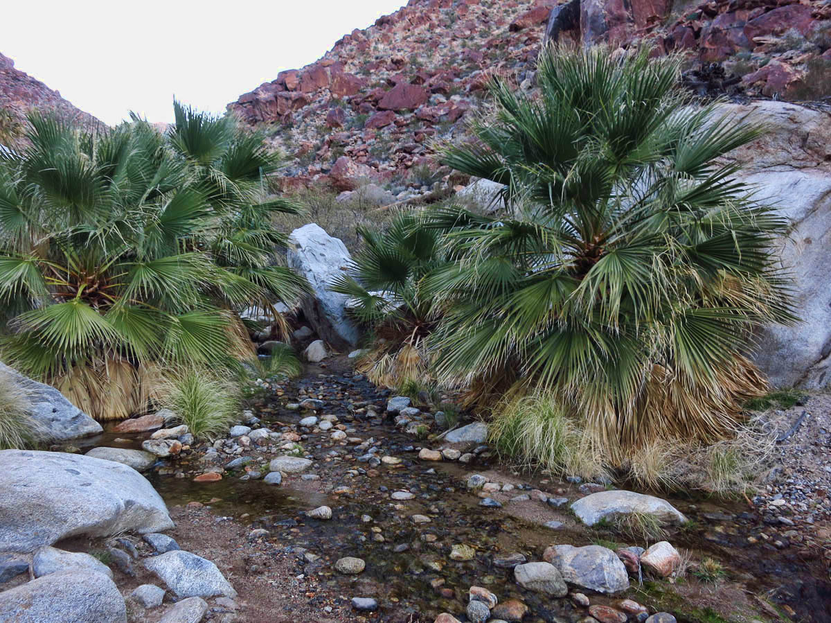 I was surprised to see how much water was in the spring at Palm Canyon.