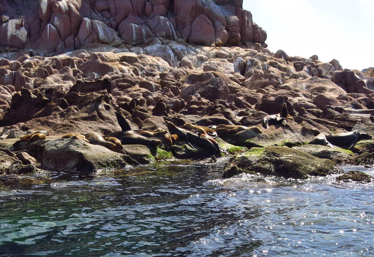Sea lions are well disguised on the shoreline, but there are reported to be 300 of them here.