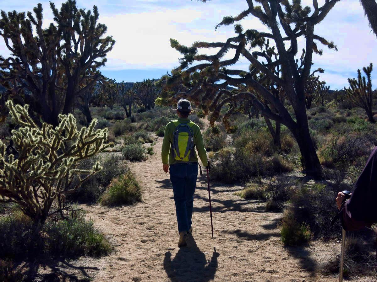 The hike to Teutonia Peak, 3.5 miles goes through this Joshua Tree forest.