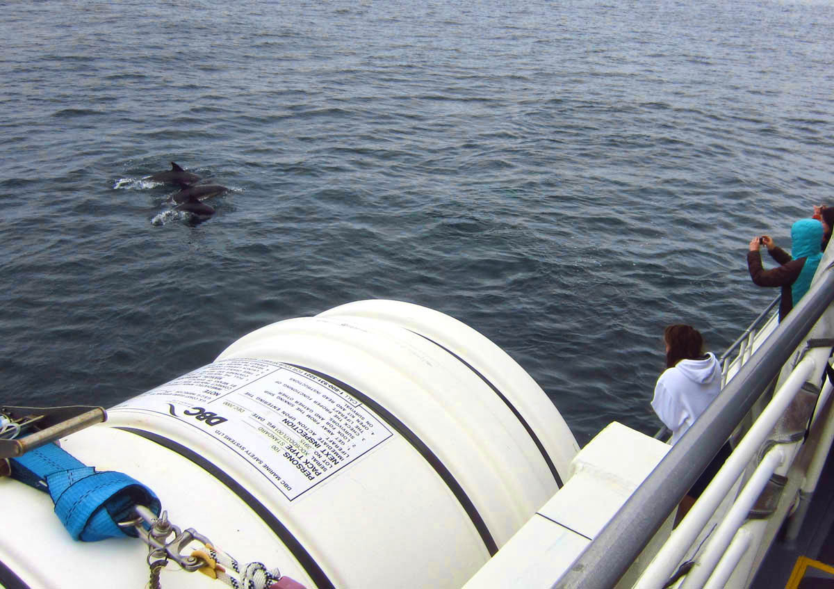 We are not long into the one hour crossing when our Captain spots a pod of dolphins...