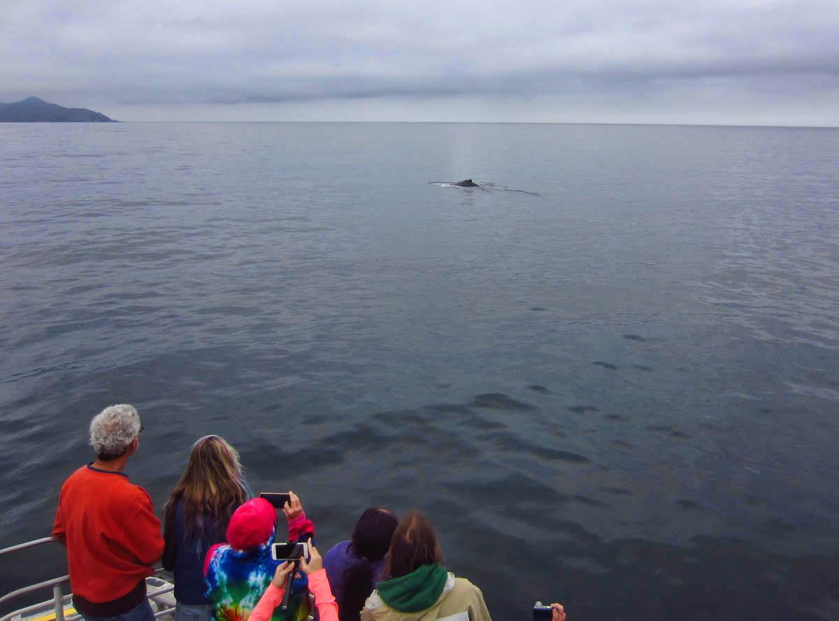 Next, three humpback whales...