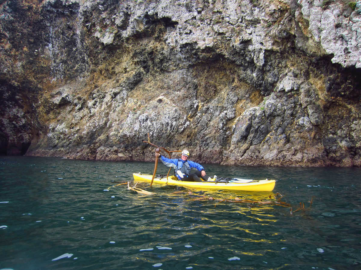 """Our guide, """"Rye"""" shows us Elkhorn kelp, named for the large branches that look like horns."""