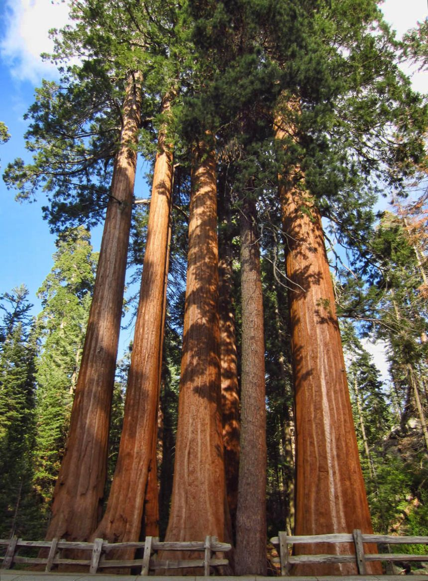"Grant Grove is just a short walk from the Azalea Campground. This group is called ""Happy Family."""