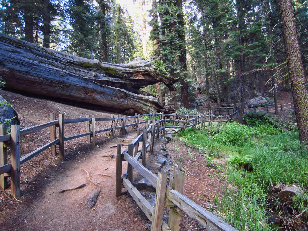 "The one mile trail passes several ""downed"" trees."