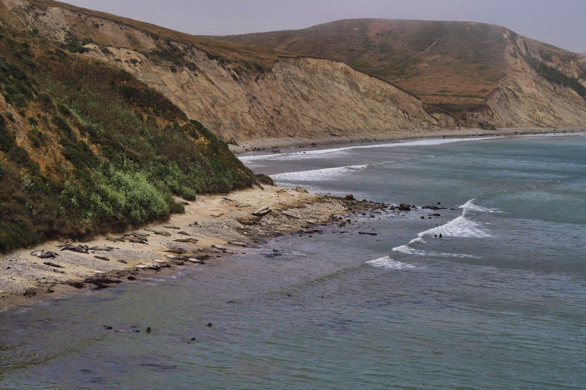 What looks like logs on the beach is actually elephant seals.
