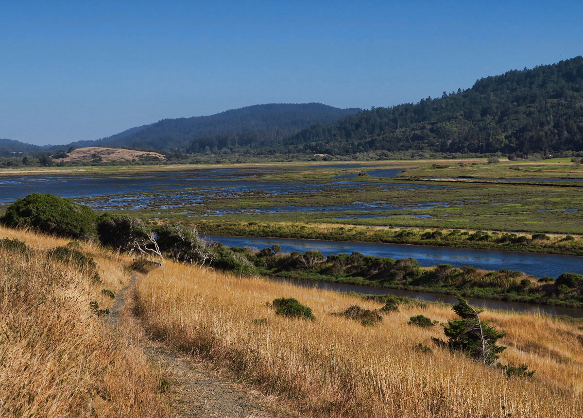 Just down the road is the Tomales Bay Trail, which leads through dairy pastures to the bay.