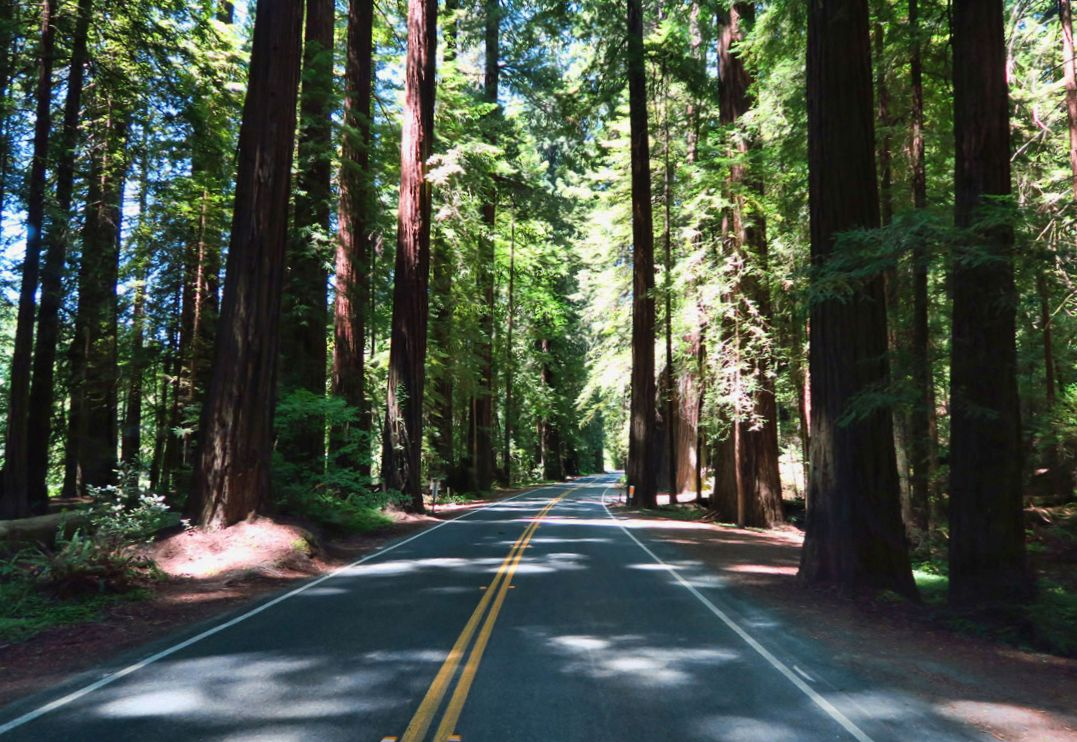 "Nearing the California / Oregon State Line, passing through the majestic redwoods. John Steinbeck said, ""The redwoods, once scene, create a vision that stays with you always...they are not like any other trees we know, they are ambassadors of another time."""