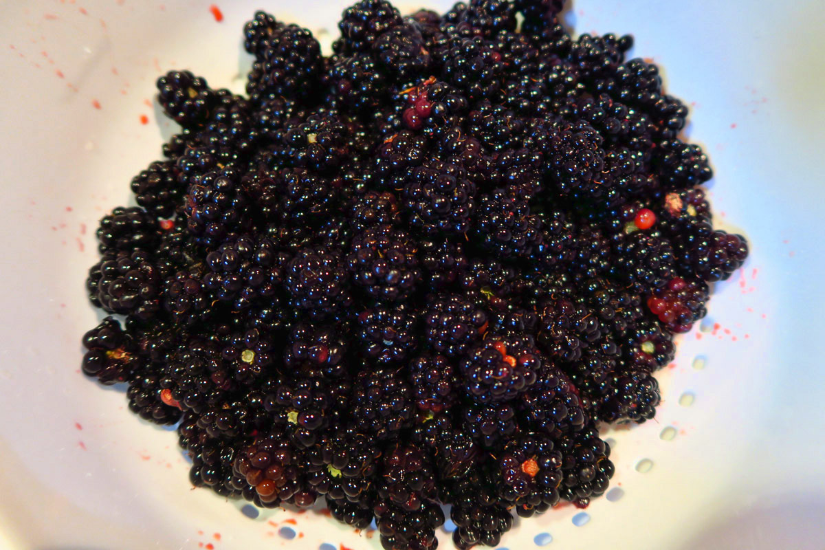 My blackberry breakfast bounty is just one of the many delights of returning to the Oregon Coast.