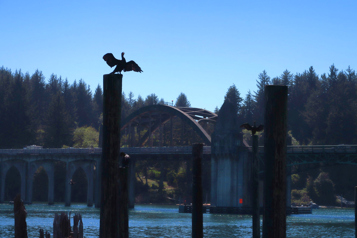 Cormorant dries his wings in front of the Florence Bridge.