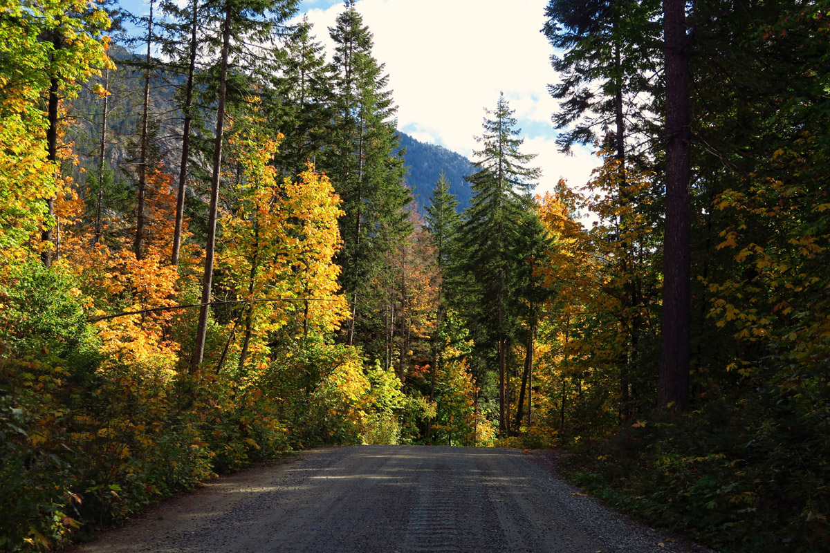 The road alternates between hardwoods with falling leaves...