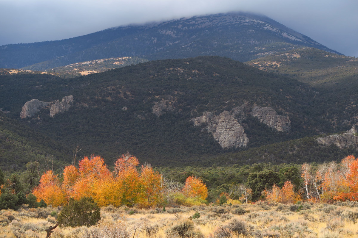 The only fall color remaining in Great Basin in November...