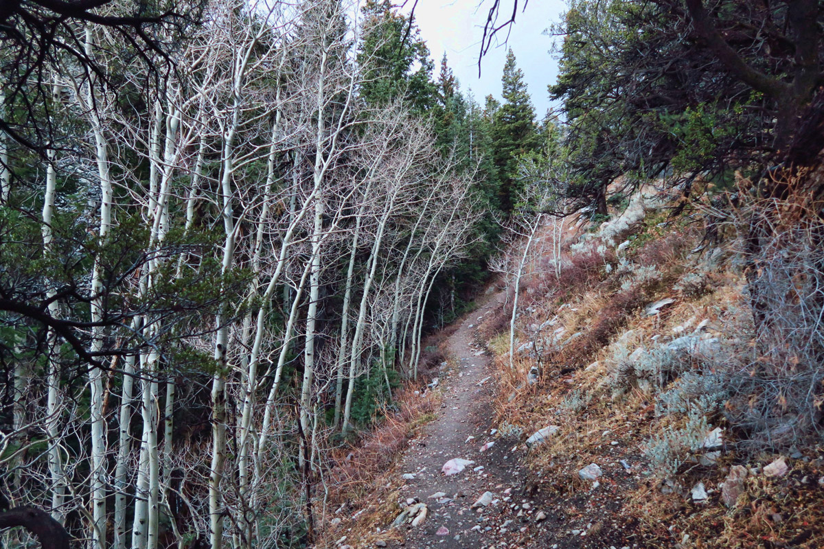 The Baker Loop Trail runs along the creek through several aspen groves.
