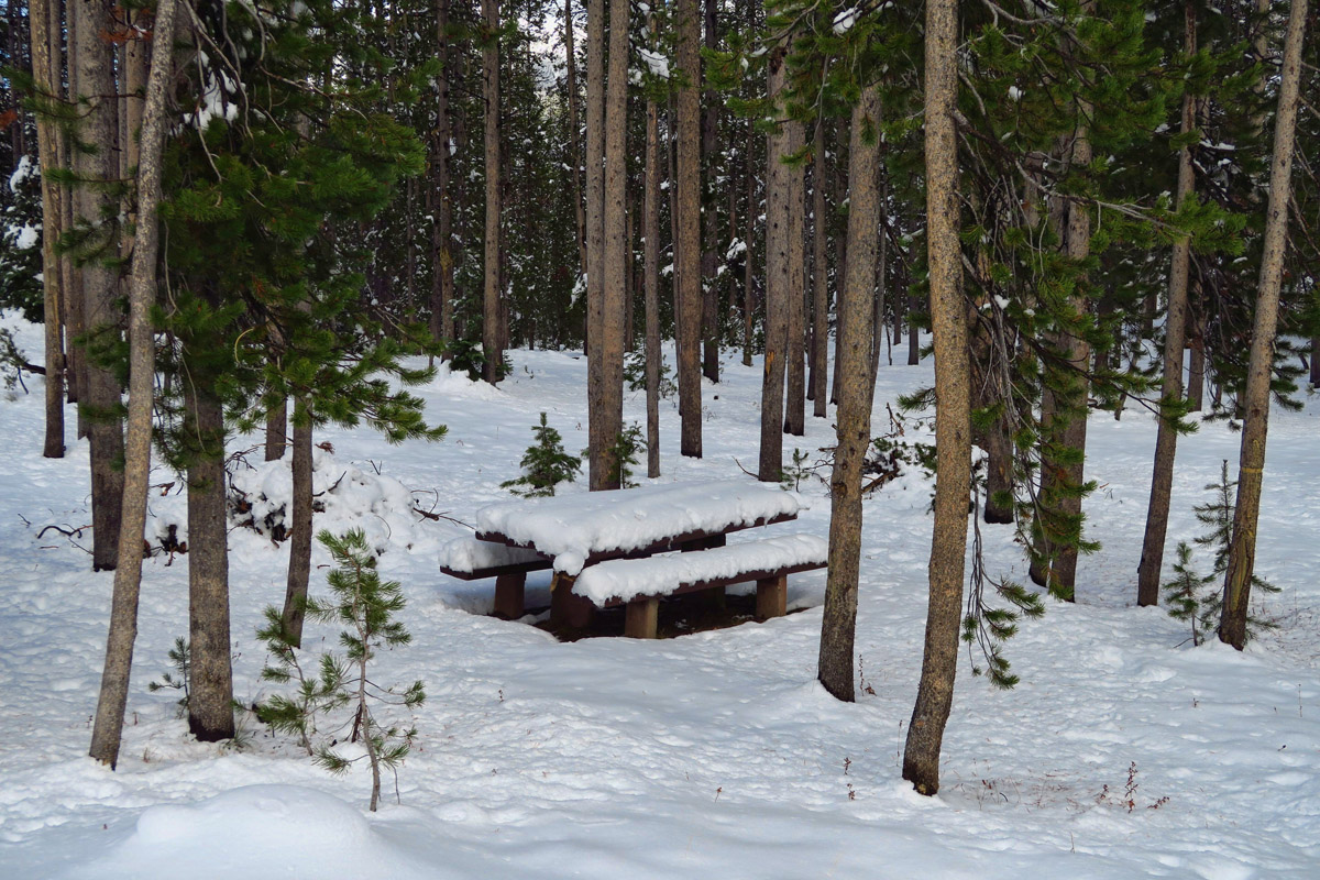 Picnic Area shows considerable fresh snowfall, now cleared from the road.