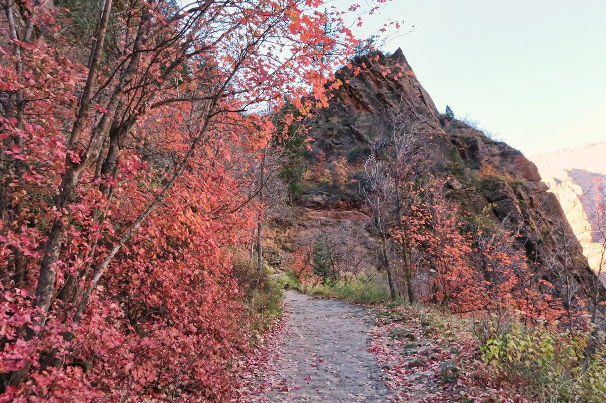 I want to do a hike I've never done before in Zion, so I am on the way up the East Rim Trail to Observation Point.