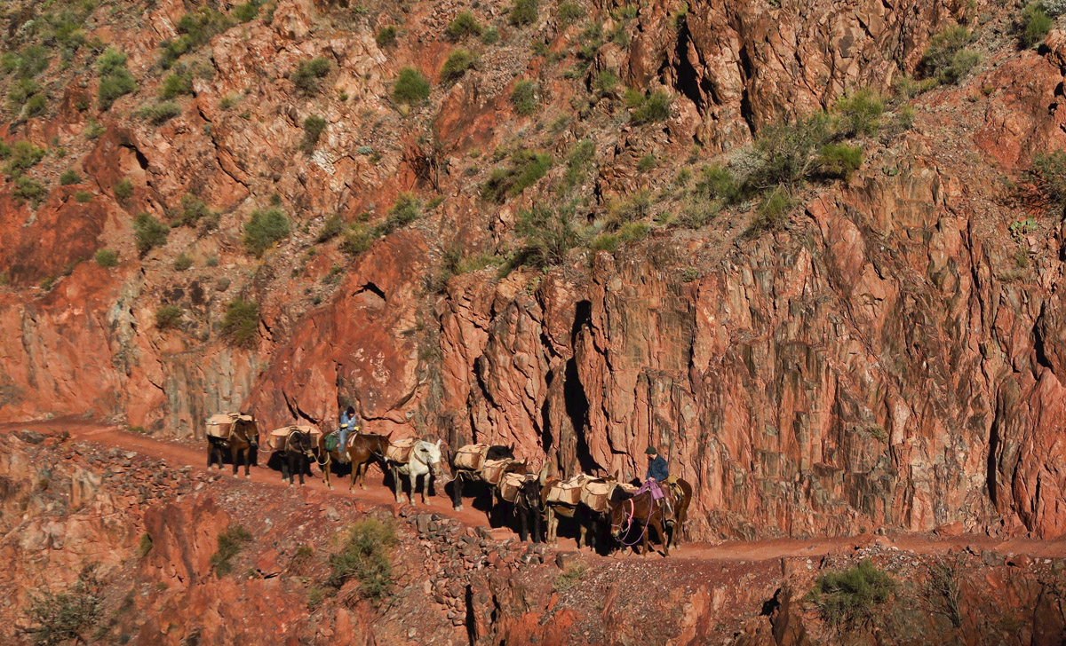 When meeting the mule trains, hikers are to yield, stopping on the inside edge of the trail, thankfully!