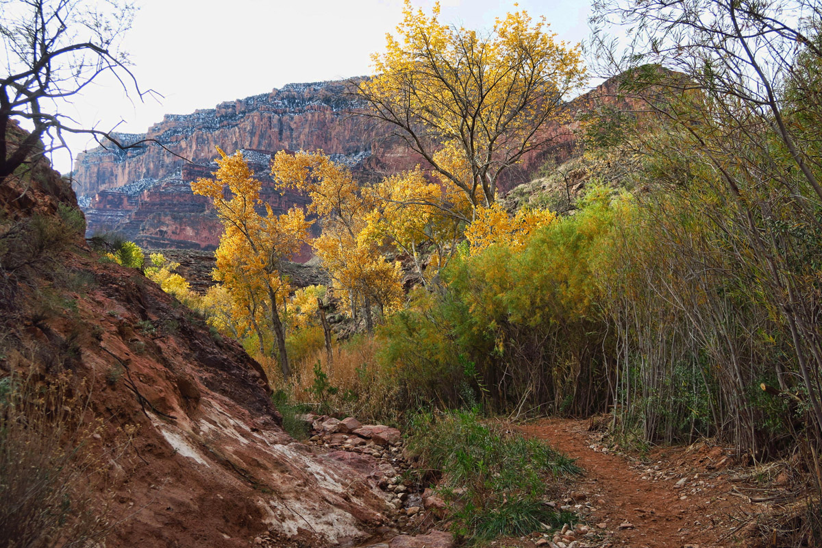 I thought I had regrettably left the golden cottonwoods behind in Zion. I enjoyed their company on the trail...