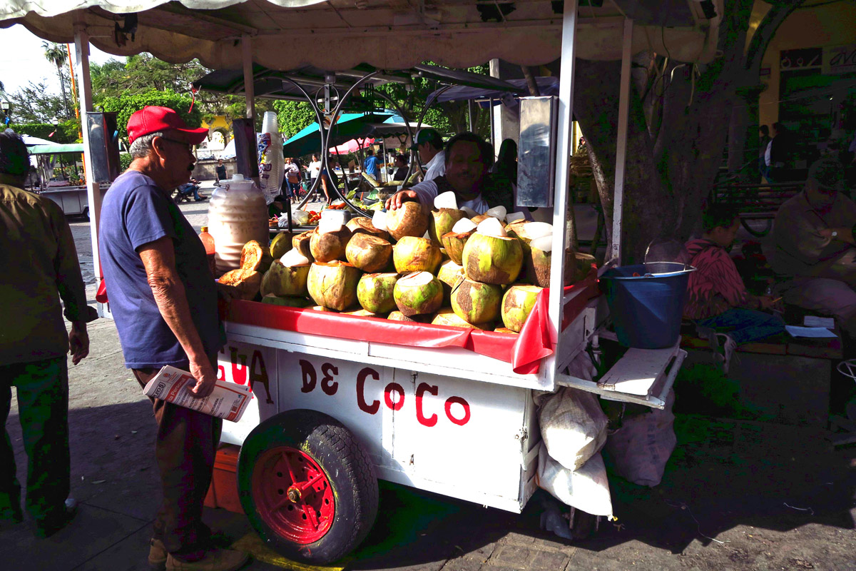Fresh coconuts for sale.