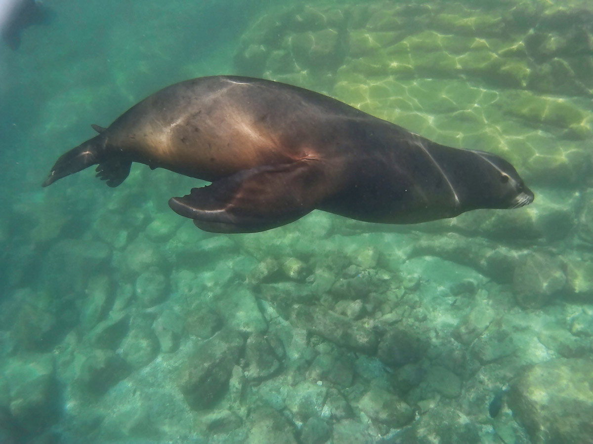 There are reported to be 300 sea lions at the Espiritu colony.