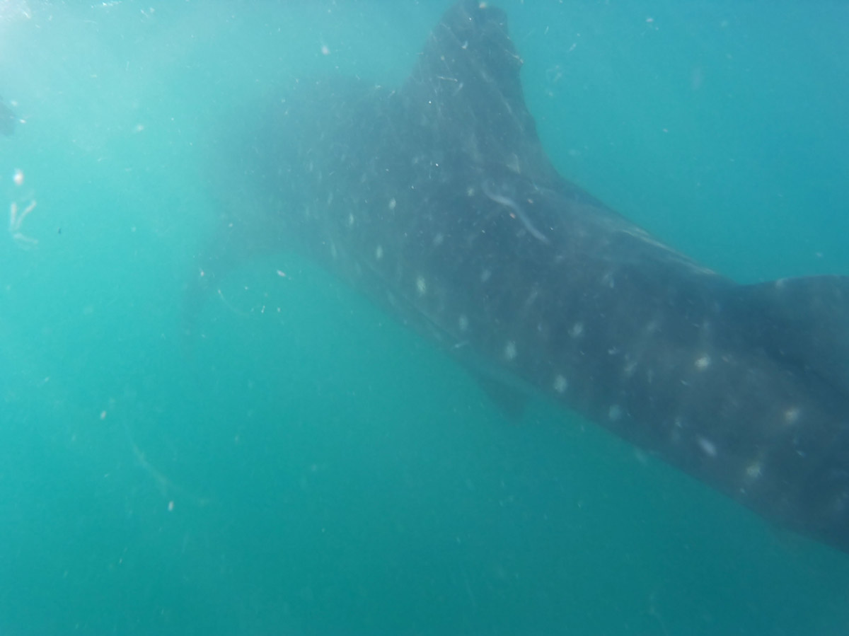 Now back underwater, the camera does better...especially considering that this guy was a bit far...