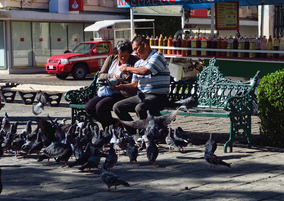 Pigeon feeding in Plaza Republica
