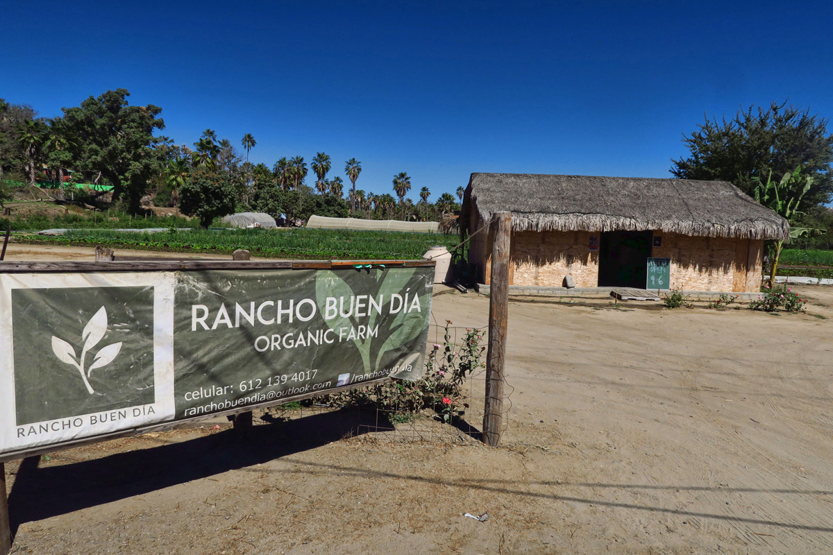Rancho Buen Dia, one of the many organic farms in Todos Santos.