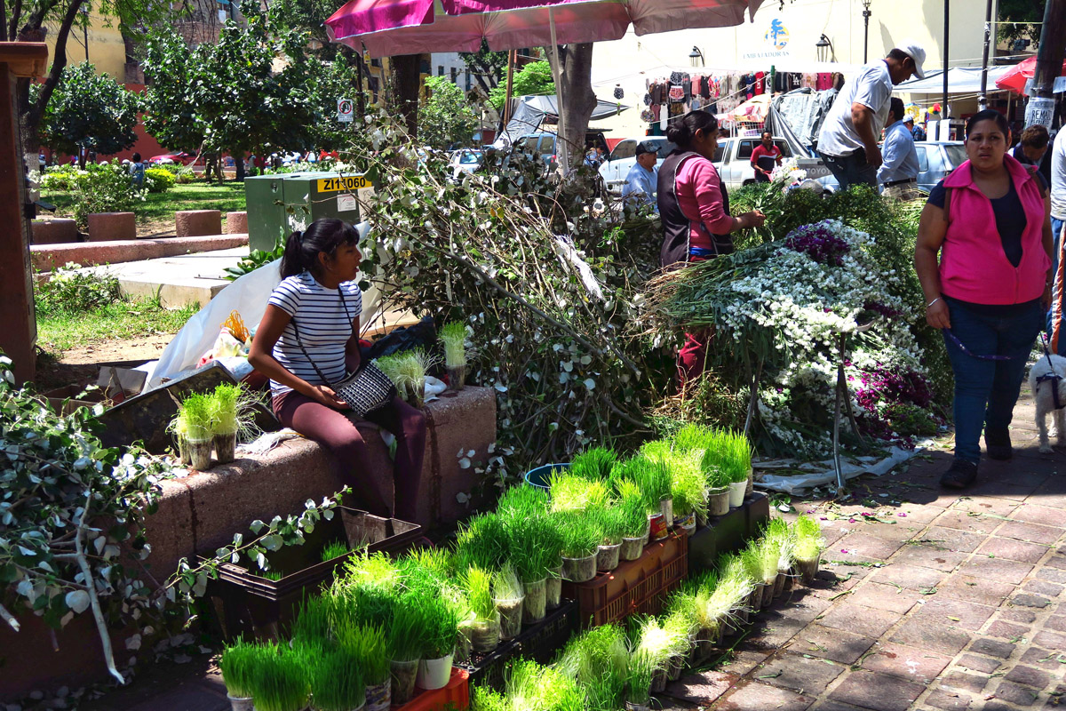 The Mexican people are great entrepreneurs. If sprouting wheat is required for the building of altars, dozens of vendors appear, selling wheat grass just on the verge of sprouting.
