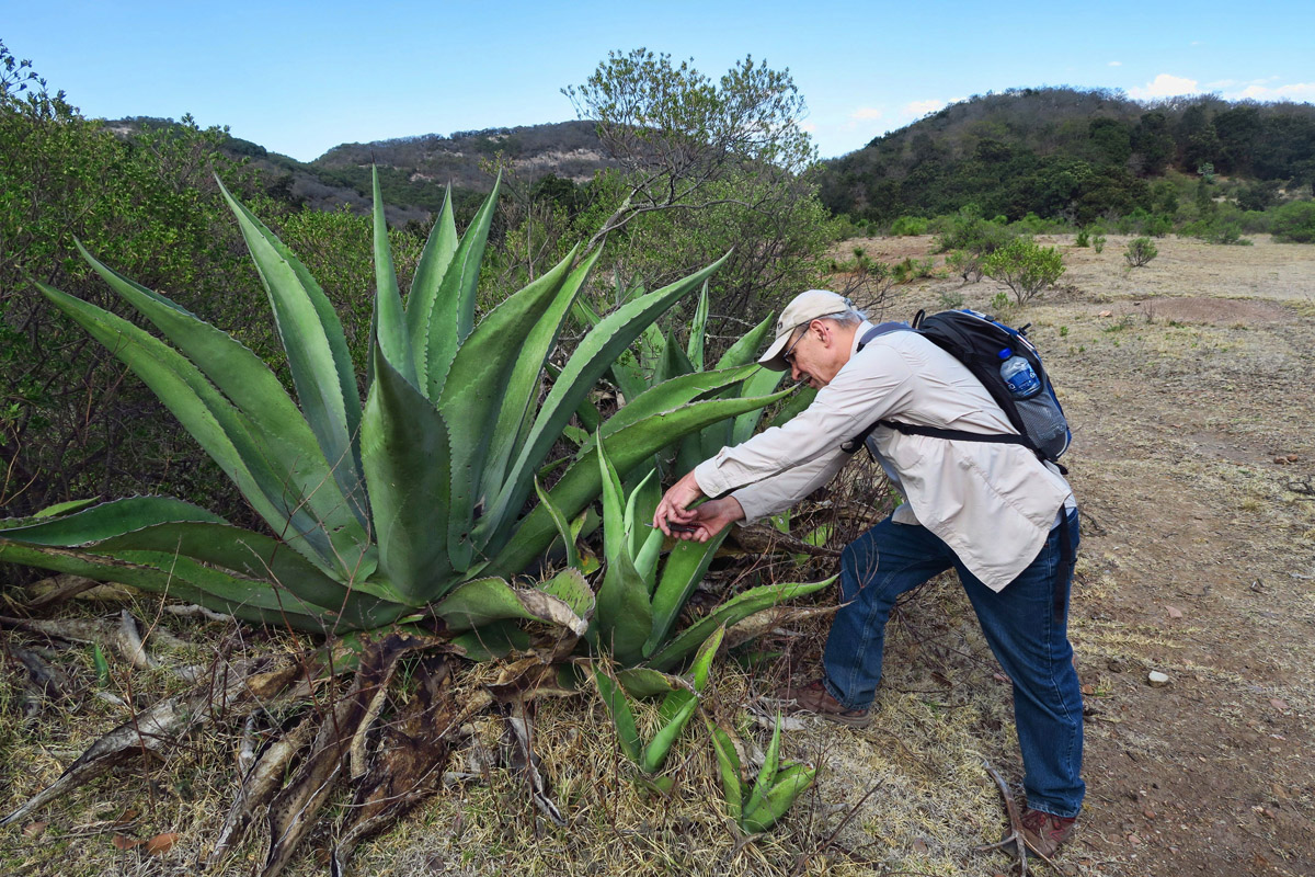 "Fellow classmate Rob, half-jokingly decides to look for water in the agave plant, ""just in case."""