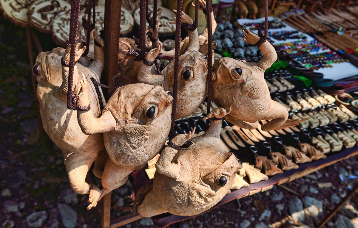 Vendors line the entrance to Las Pozos, selling all sorts of bizarre items. These are frog purses, complete with zipper up the gut.