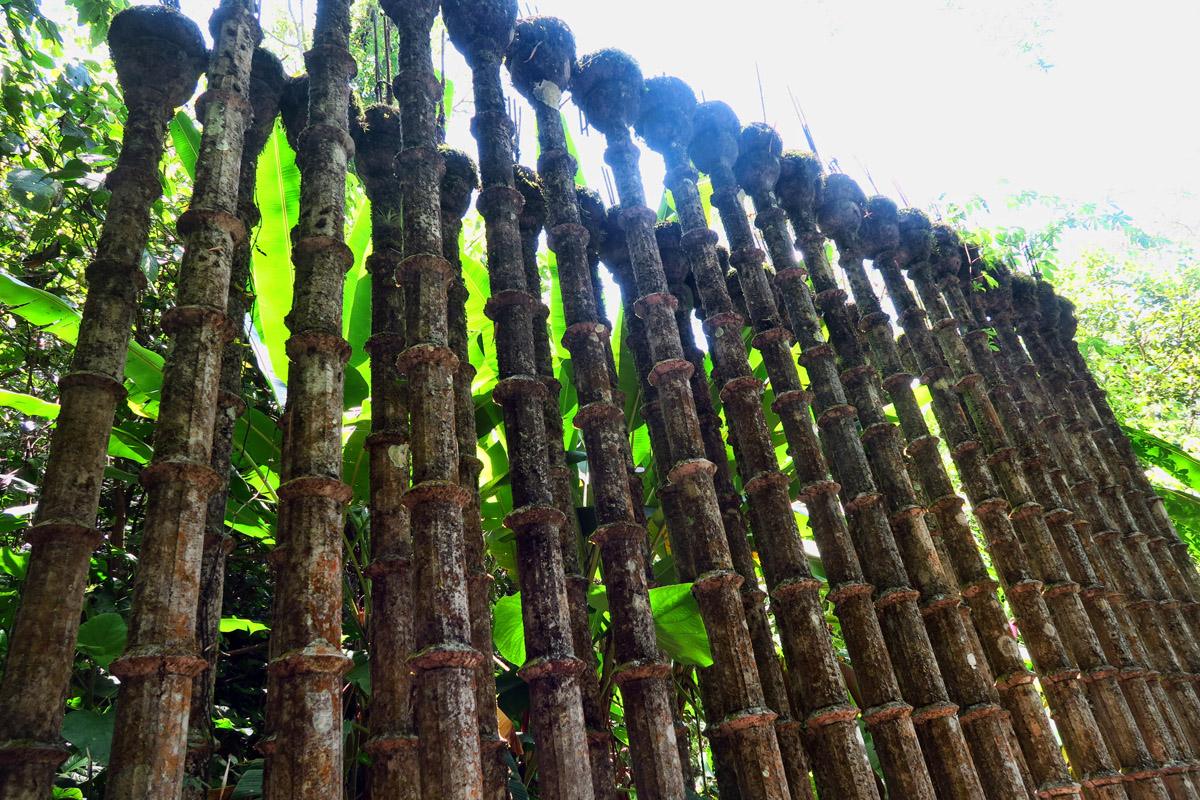 The Bamboo Fence