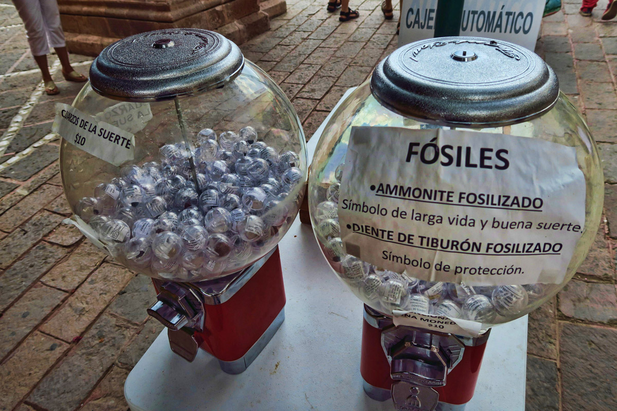 Never saw fossilized shark teeth for sale in a gumball machine before!