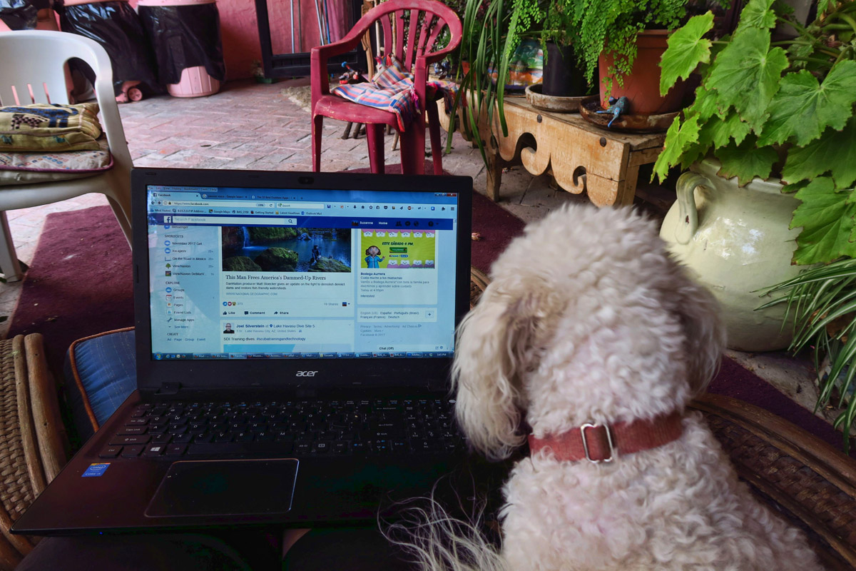 Lillybelle enjoys a good Facebook fix as do I.