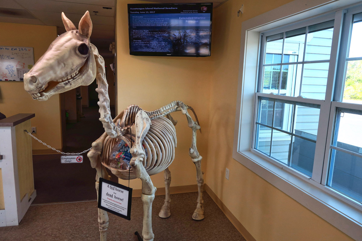 "Edicational display in the Assateague Visitor Center, ""A fed horse is a dead horse."""