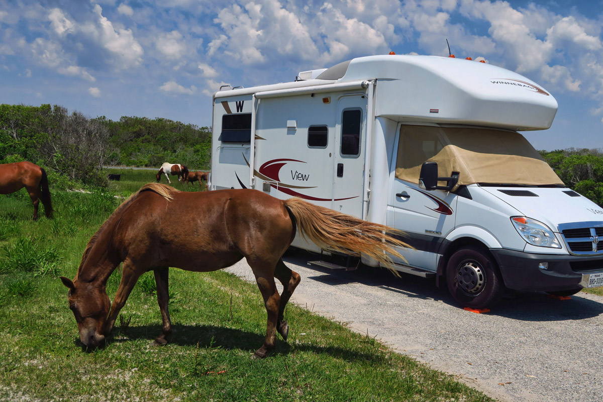 Assateague National Park's main fame is their wild horses, about 100 on the island.