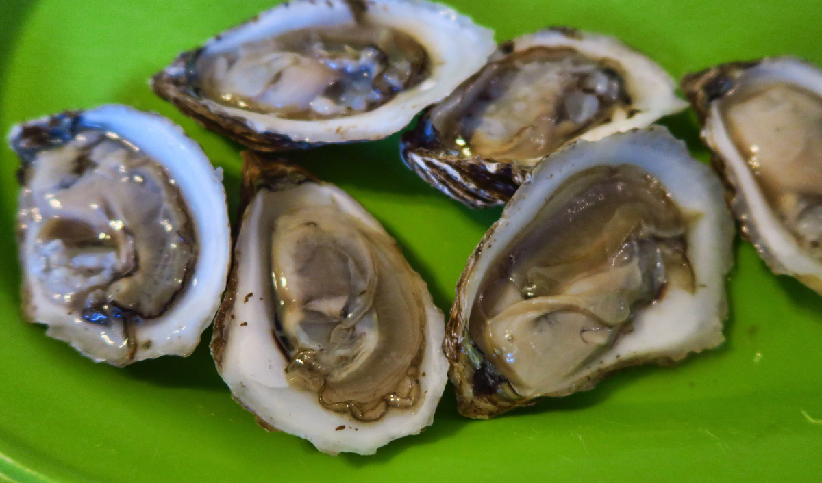Aspy Bay Oysters farmed in the bay across the road by the owner of Hide Away Campground. MMMmmm good!