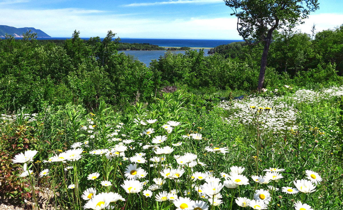 Hide Away Campground was a lovely spot with a beautiful few overlooking a field of daisies.