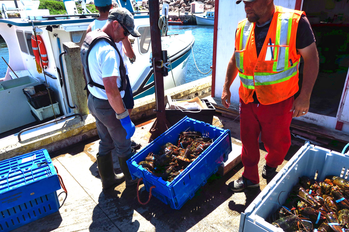 They loaded boxes and boxes of these live lobsters into a Budget Truck.